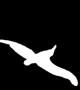 bird 1 267x300 - bird