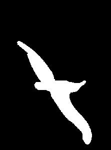 bird 222x300 - bird
