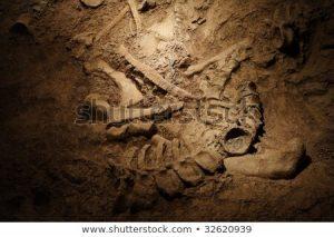 dinosaur fossil rock sandyunnan 450w 32620939 300x213 - dinosaur-fossil-rock-sandyunnan-450w-32620939